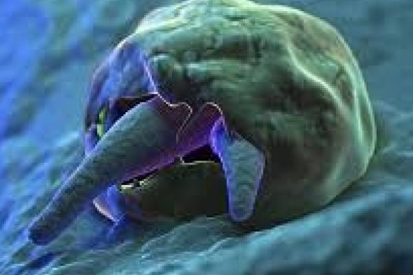 Cryptosporidium - What is It? Should You Be Concerned?